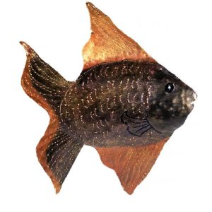 Fish-Wall-Hanging-Small-600x600-2